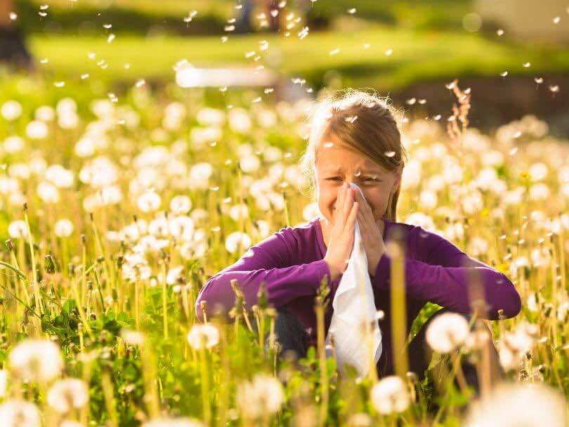 TOP 10 HAY FEVER REMEDIES