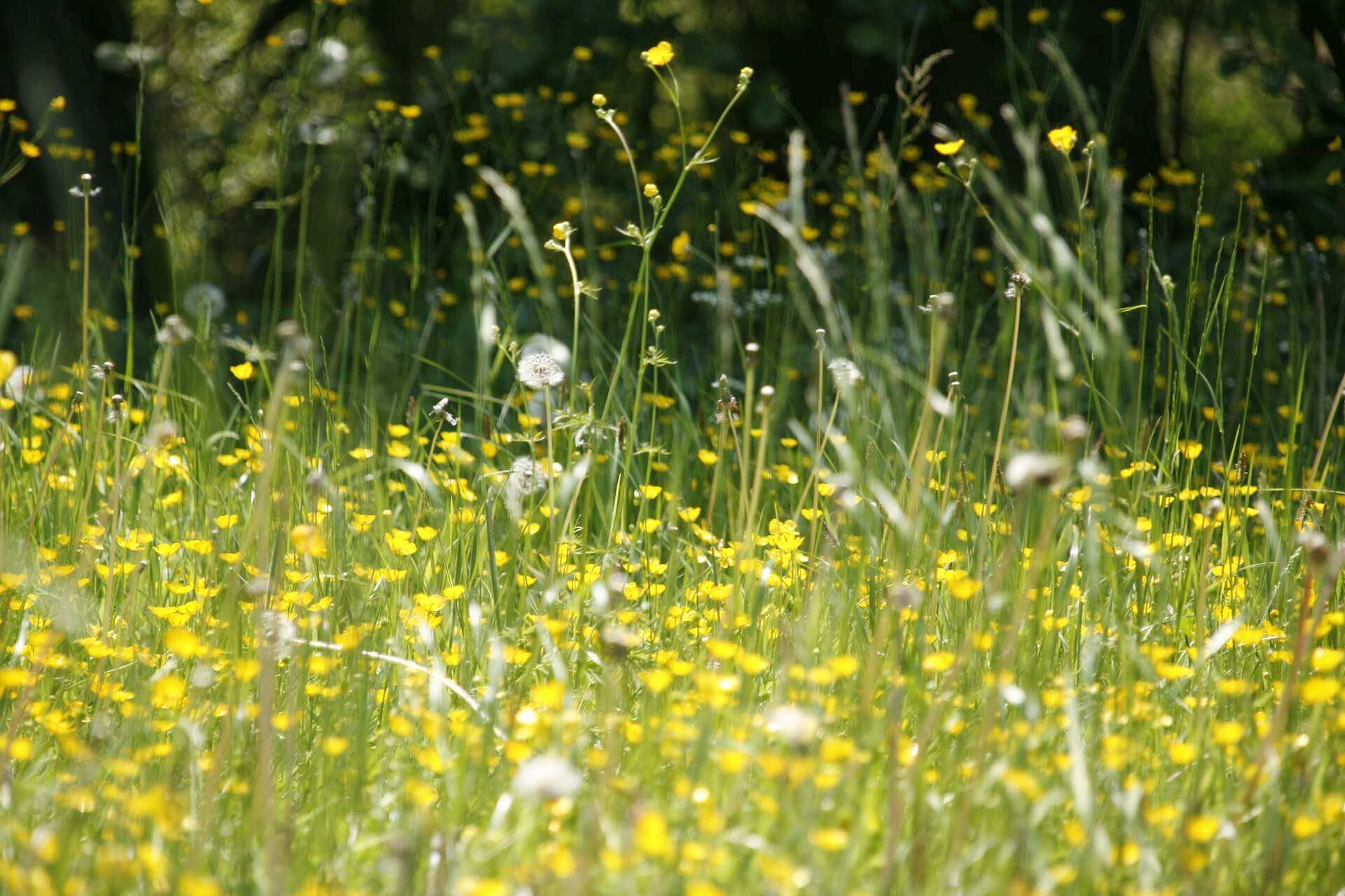 WHAT CAUSES HAY FEVER?